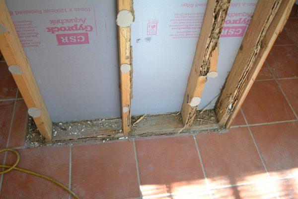 Termite 2 DSC_0162