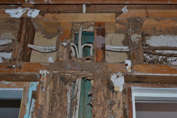 Termite 4 DSC_0781