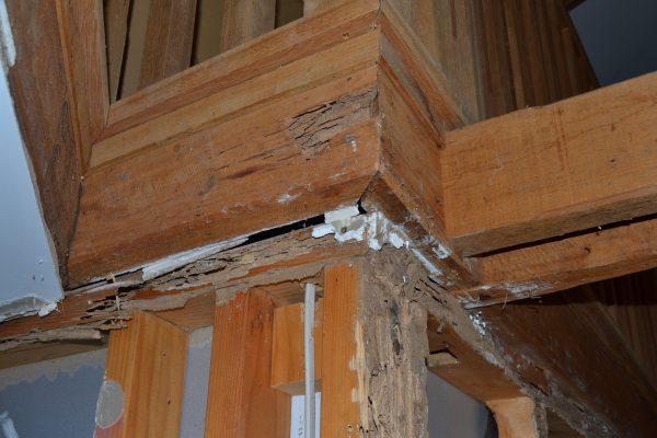 Termite 5 DSC_0784